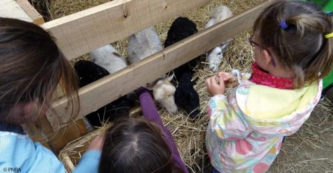 Animation Veaux, vaches, cochons - photo : PNRA