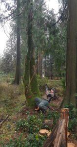 Technique pour relever l'arbre - photo : Perrine Veguer