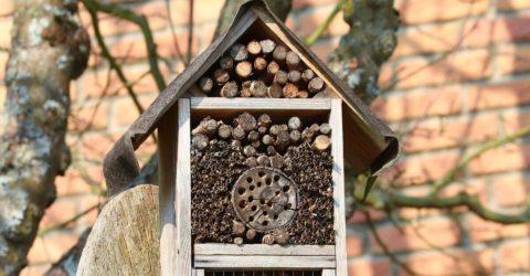 Abri à insectes